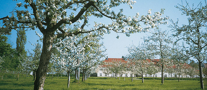 Picture: Orchards of the palace