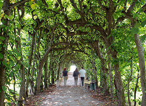 Picture: Pergola in the Dachau Court Garden
